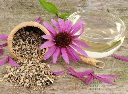 CHÁ DE EQUINÁCEA 50G (Echinacea Purpurea)
