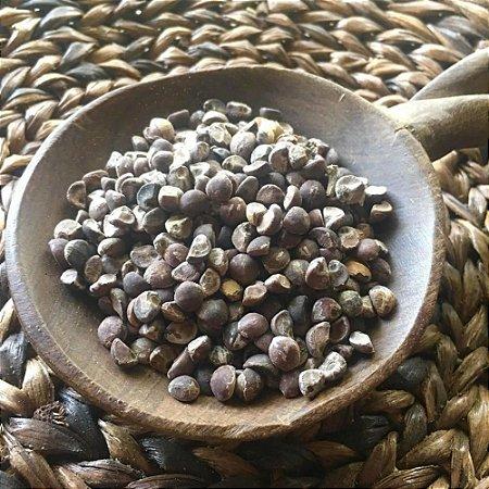 Argyreia Nervosa - 30 sementes