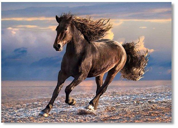 Quadro Decorativo Decoração Cavalo