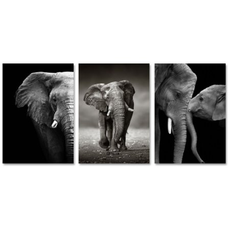 Kit Quadros Decorativos Elefantes
