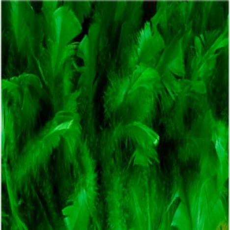 Estola - Pluma de Penas Verde Bandeira