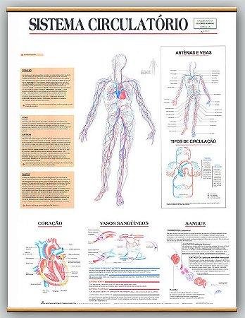 Mapa Sistema Circulatório
