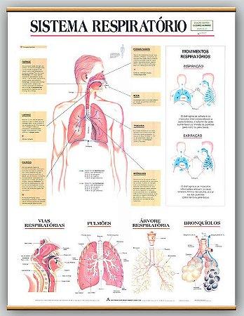 Mapa Sistema Respiratório