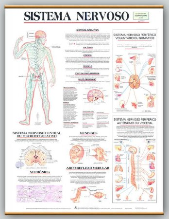 Mapa Sistema Nervoso