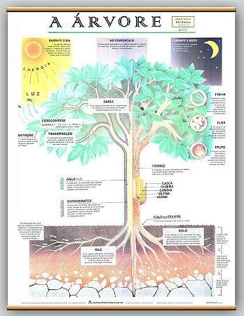Mapa a Árvore