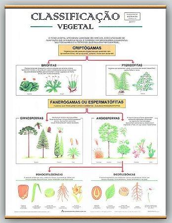 Mapa Classificação Vegetal