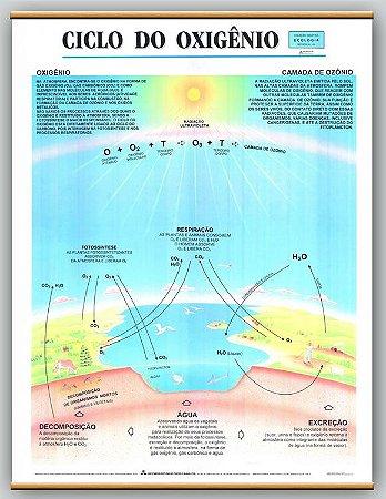Mapa Ciclo do Oxigênio