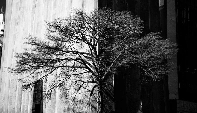 Preto no Branco, Árvore do MASP