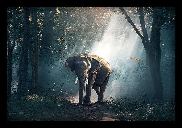 Quadro Decorativo Animais Elefante