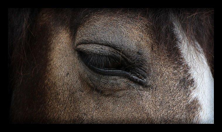 Quadro Decorativo Animais Cavalo