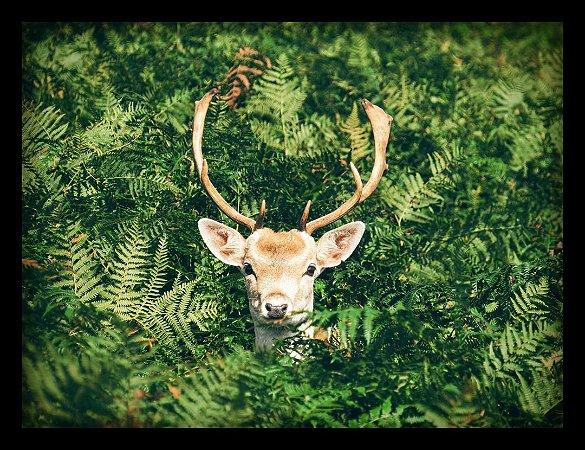 Quadro Decorativo Animais Cervo 1