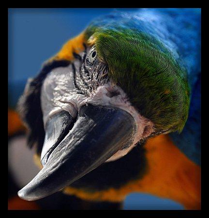 Quadro Decorativo Animais Papagaio
