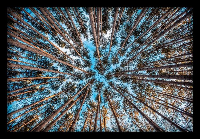 Quadro Decorativo Natureza Floresta 1