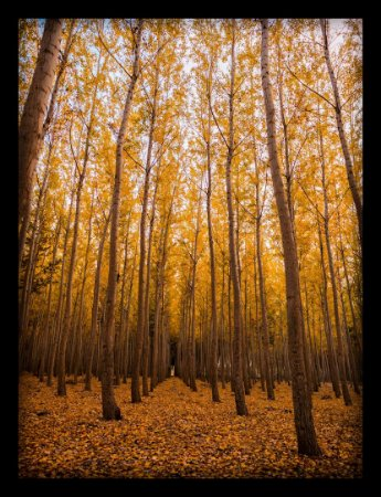 Quadro Decorativo Natureza Floresta 2