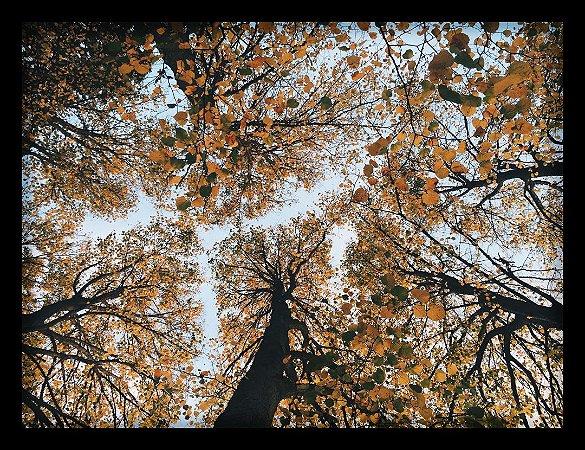 Quadro Decorativo Natureza Floresta 3