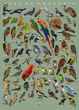 Poster Aves da Amazônia