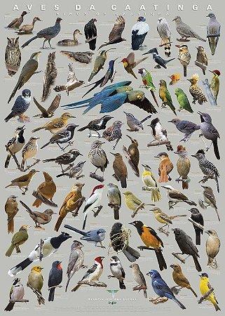 Poster Aves da Caatinga