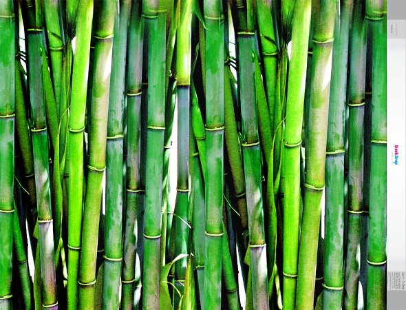 Fundo Fotografico - Bambu Verde (1,60 x 2,10 metros)