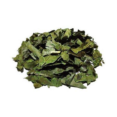 DV Chá Verde (Camellia sinensis) Partes Aéreas