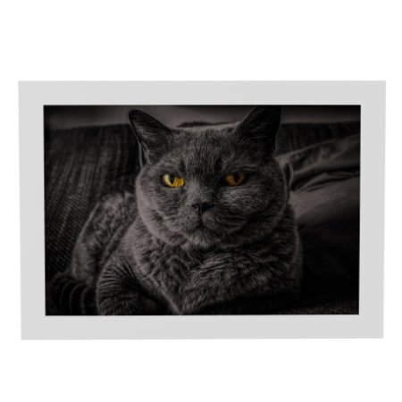Quadro Decorativo Gato Preto e Branco