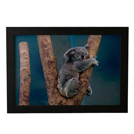 Quadro Decorativo Koala Dormindo
