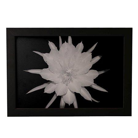 Quadro Decorativo Cacto Epiphyllum