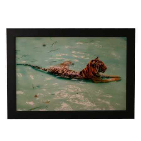 Quadro Decorativo Tigre na Piscina