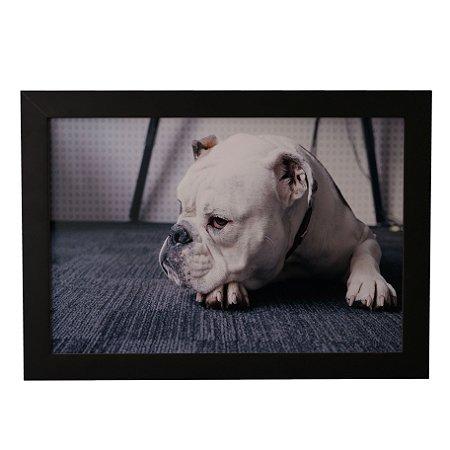 Quadro Decorativo Cachorro Deitado