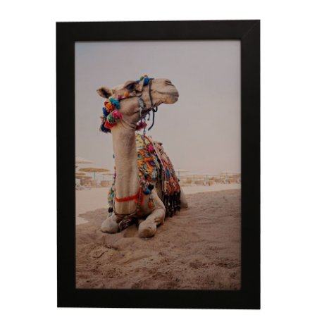 Quadro Decorativo Camelo Colorido