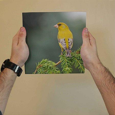 Azulejo Decorativo Pássaro Amarelo