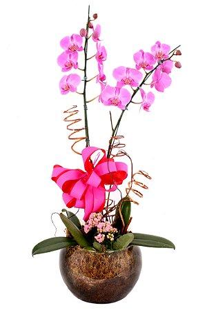 Vaso Plantado Lindas Orquídeas