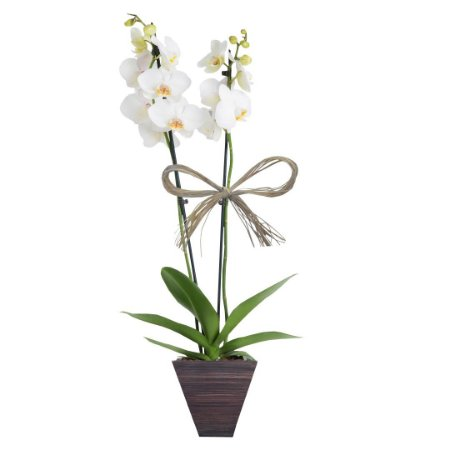 Orquídea Branca com 02 Hástes no Vaso de Madeira