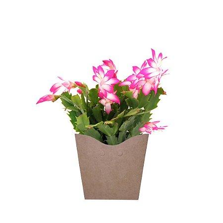 Flor de Maio Plantada no Cachepot para Presente