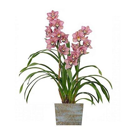 Orquídea Cymbidium Rosa com 02 Hástes Na Madeira