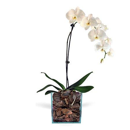 Orquídea Branca Cascata com 01 Háste no Vaso de Vidro