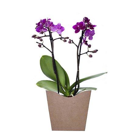 Mini Orquídea Roxa com 02 Hástes no Cachepot para Presente