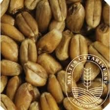Malte Catarinense Trigo 100g
