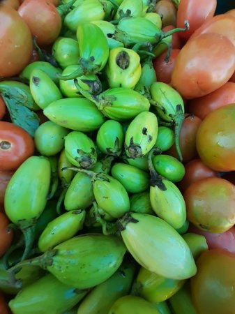 Jiló Verde Claro Kilo - Agro Top