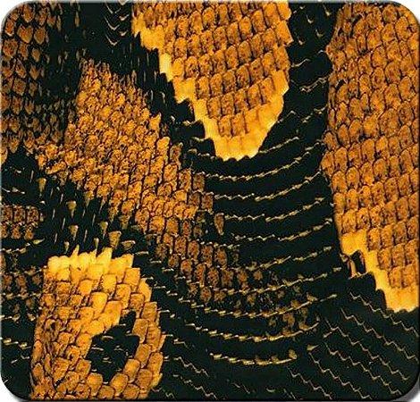 Pele de Cobra amarela