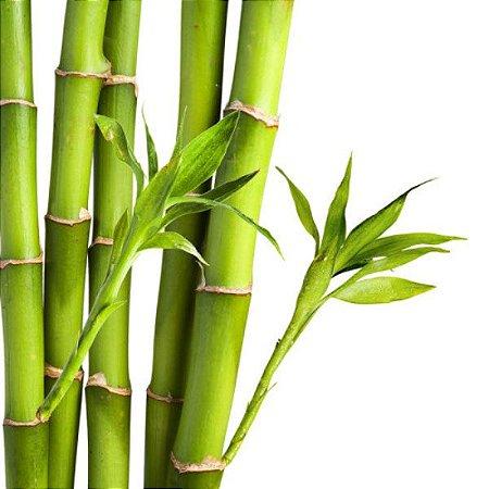 Essência Aroma Bamboo (Direção Olfativa BAMBOO M MARTAN) 100ml