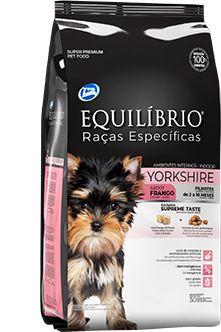 Equilibrio   Yorkshire Terrier Filhote 2 kg