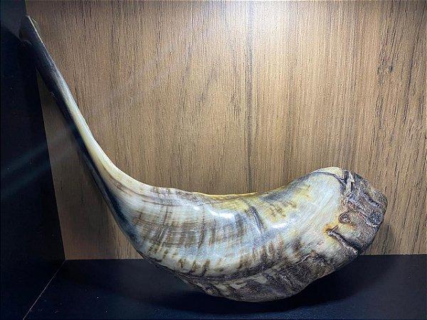 Shofar de Carneiro Modelo 5