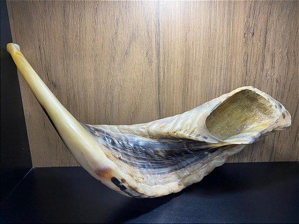 Shofar de Carneiro Modelo 8