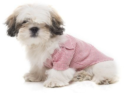 Camisa Social para Pet