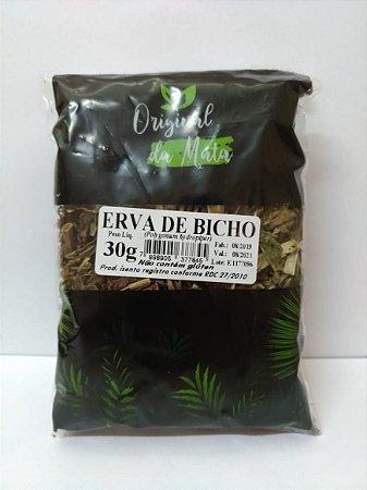 Erva de Bicho - 30gr (Original da mata)
