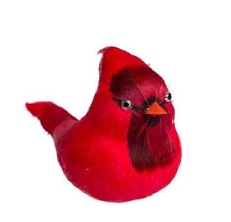 Passaro Cardeal Vermelho