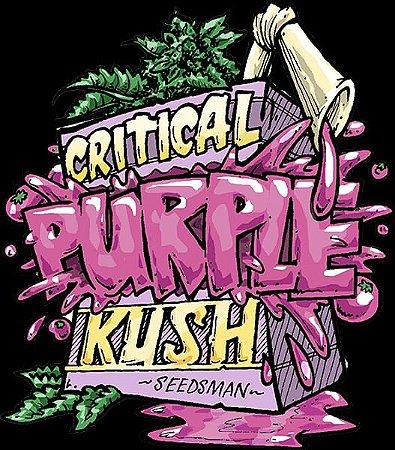 Critical Purple Kush Feminizada Pack c/ 5x