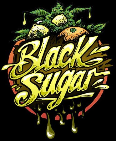 Black Sugar Feminizada Fotopériodo Pack c/ x1