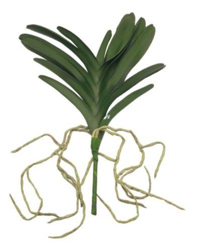 Folha Broto Verde De Orquídea Grande Raiz 50 Cm Decoração