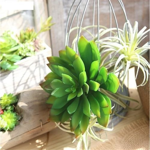 Planta Suculenta Lótus Artificial 16x10 Cm Decoração